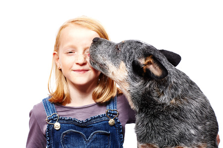 girl with a australian cattle dog Stock Photo