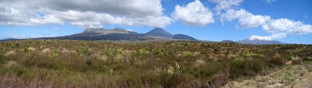 tongariro national park: Panorama of the volcanos in the Tongariro National Park on the North Island of New Zealand
