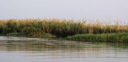 river bank: River bank of the Okavango in Botswana.