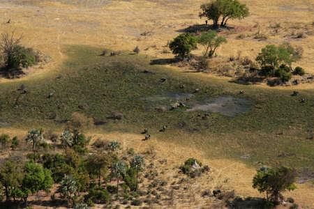 Okavango Delta:  Aerial view of Elephants in the Okavango Delta, Botswana.