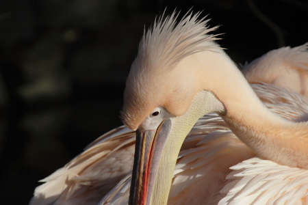 Close up of a Pelican Stock Photo - 4783300