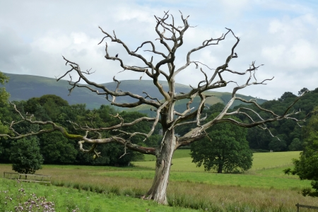 Dead tree at Derwent Water Stock Photo - 15205549