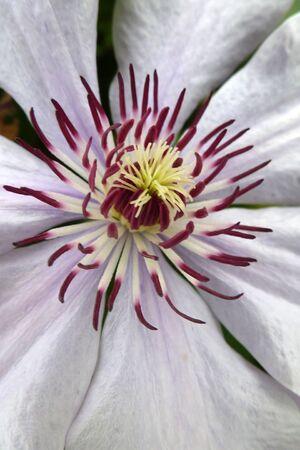 Flower Close-Up Stock Photo - 15205543