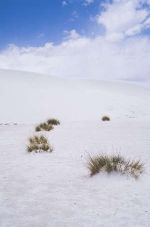 White Sands National Monument, New Mexico, USA. Stock Photo - 5692025