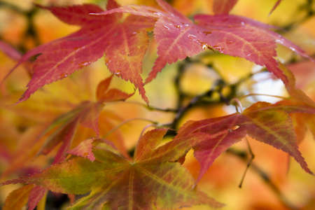 Colorful Foliage during the Autumn season. Stock Photo - 5774912