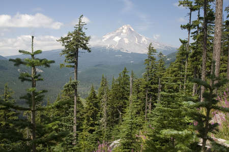 Majestic View of Mt. Hood on a bright, sunny day during the summer months. Stock Photo - 6166968