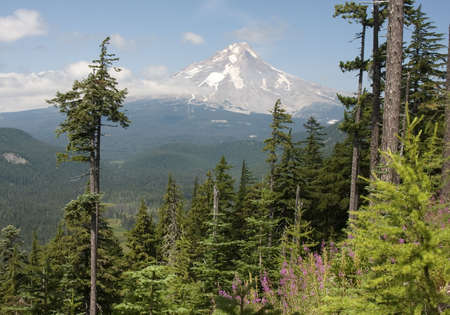 Majestic View of Mt. Hood on a bright, sunny day during the summer months. Stock Photo - 6166955