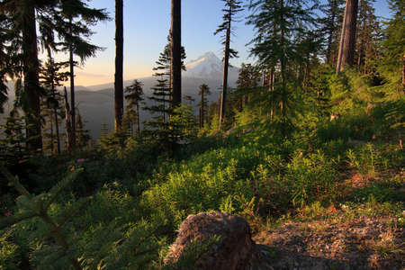 Majestic View of Mt. Hood on a bright, sunny day during the summer months. Stock Photo - 10201968
