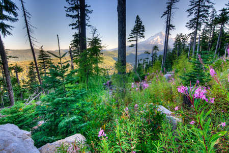 oregon cascades: Majestic View of Mt. Hood on a bright, sunny day during the summer months. Stock Photo
