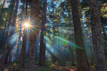 Een mooie ochtend met zonnestralen schijnt door de bomen het bos Stockfoto