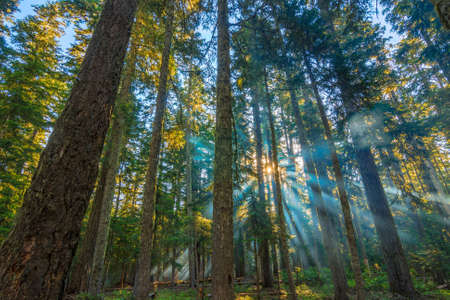 shining through: A beautiful morning with sunrays shining through the forest trees. Stock Photo