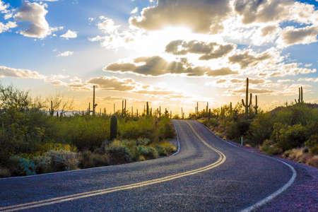 Verbazingwekkende Sunset Schilderij van Saguaro National Park