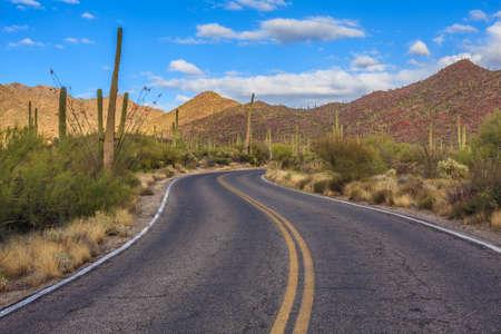 gigantea: Amazing Image of Saguaro National Park Stock Photo