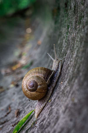 Closeup snail crawling in the stone drain