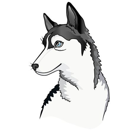 Dog. Puppy Siberian Husky. vector illustration. Portrait of a young blue-eyed Siberian Husky.