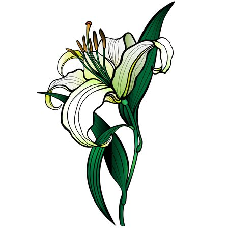 Lily. Flower of white lily. Exquisite flower of a white garden lily with a stalk and leaves - stock illustration. Vector illustration. Outline