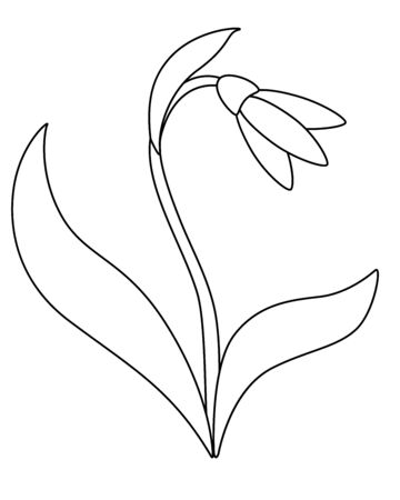 Snowdrop Snowdrop flower with leaves and stalk. White forest primrose. First spring flower