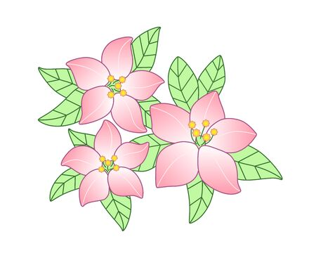 Spring flowers. Inflorescences and young tender leaves on flowering trees. Pink inflorescences of cherry or apple tree - vector full-color element for the design of postcards, banners and websites.