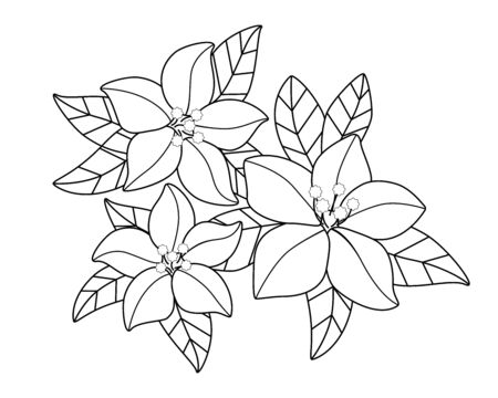 Spring flowers. Inflorescences and young tender leaves on flowering trees. Inflorescences from trees - a linear vector element for coloring. Flowers of the spring garden. Outline Hand drawing.