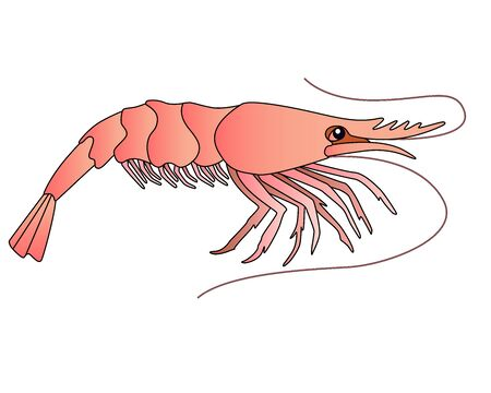 Shrimp - a small marine crustacean living underwater - a vector full-color picture in a cartoon style. An animal from the ocean is a shrimp. Seafood, marine life.