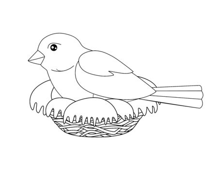 Bird sits on a nest - vector linear picture for coloring. A small bird - a sparrow hatches eggs in a cozy nest. Outline Hand drawing.
