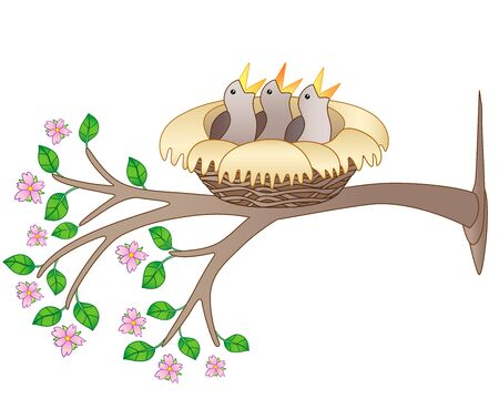 Three chicks are sitting in a cozy nest on a flowering branch - vector full color picture. Spring branch with flowers and leaves and a nest with chicks on it. Small newly hatched birds. Ilustração