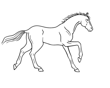 Horse galloping - vector linear picture for coloring. Outline Hand drawing. A horse in a canter center, phase with support on two legs. Fine, thoroughbred prancing stallion.