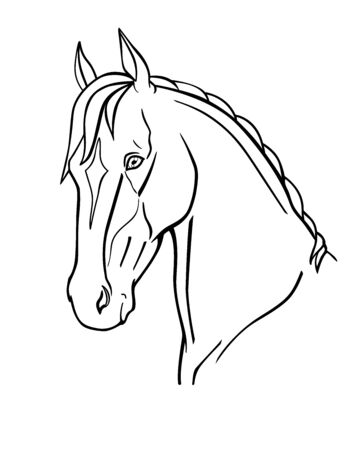 Horse Graceful Akhal-Teke horse head - linear vector illustration for coloring. Noble thoroughbred oriental horse portrait. Outline Hand drawing.