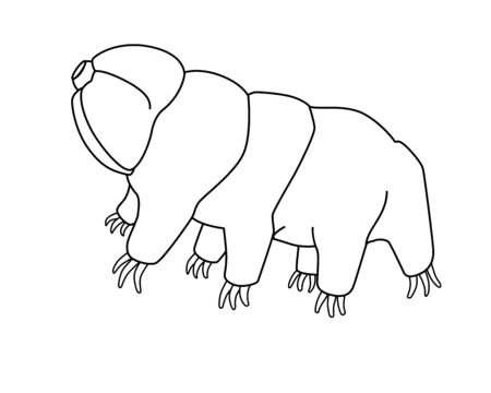 Tardigrades - vector linear picture for coloring with a microscopic animal. Tardigrades or small water bears are very small invertebrates. Eutardigrada. Outline Hand drawing.