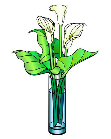 Callas. Bouquet in a glass vase - vector full color illustration. Callas are flowers and leaves in a straight cylindrical vase. White beautiful flowers. Bouquet of three flowers.