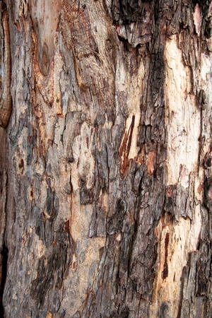 Bark Wooden texture - Bark Pattern of Old tree Stock Photo - 16561980
