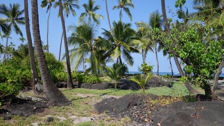 Palm trees in Puuhonua O Honaunau National Historical Park (Big Island, HI, USA)