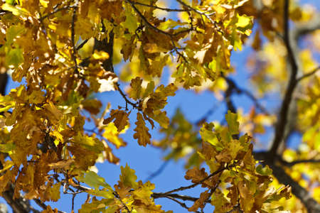 autumn leaves in the sun photo
