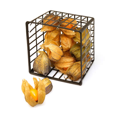 cape gooseberry: Physalis fruit on white background