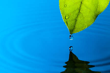 Green Leaf and Water Drop with Reflection Stock Photo - 13417895