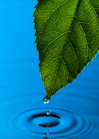 Green Leaf and Water Drop with Reflection Stock Photo - 13417904