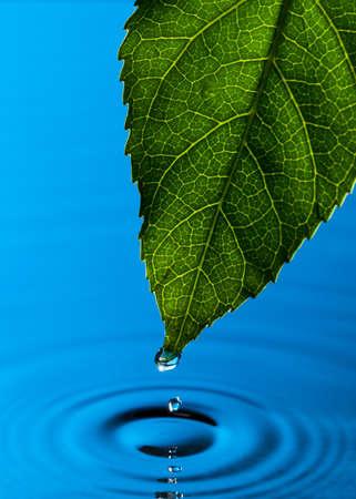 Zöld levél és a vízcsepp elmélkedés Stock fotó