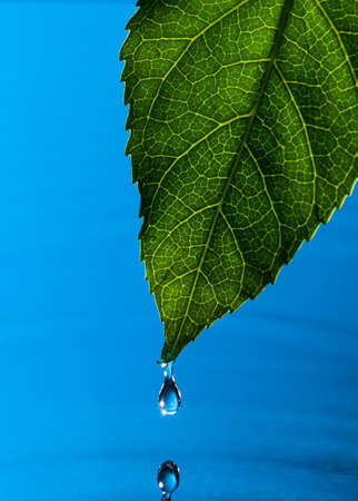 Green Leaf and Water Drop with Reflection Stock Photo - 13444741