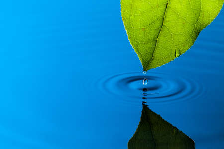 Green Leaf and Water Drop with Reflection Stock Photo - 13417890