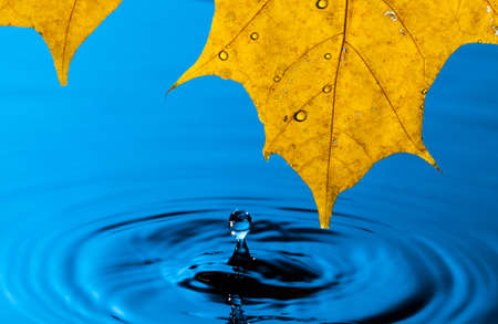 Yellow Leaf and Water Drop with Reflection Stock Photo - 13444742