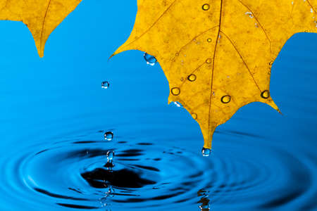 Yellow Leaf and Water Drop with Reflection Stock Photo - 13444744