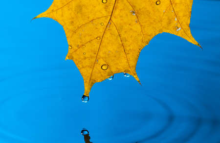 Yellow Leaf and Water Drop with Reflection Stock Photo - 13417891