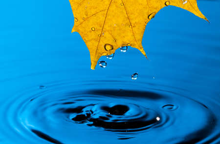 Yellow Leaf and Water Drop with Reflection Stock Photo - 13417898