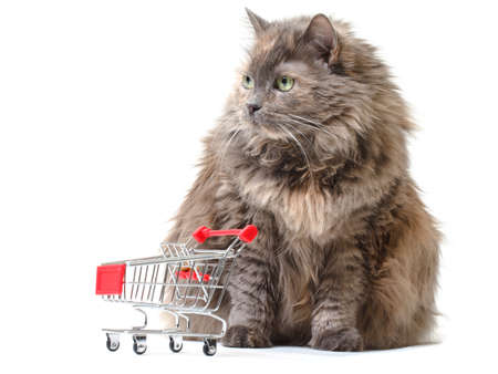 Cat with Shopping Cart on white background Stock Photo - 13671116