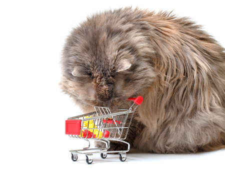 Cat with Shopping Cart on white background photo