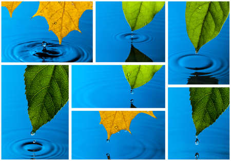 Collage from Yellow and Green Leaf and Water Drops with Reflection Stock Photo - 13980496