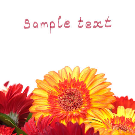 Vibrant Colorful Daisy Gerbera Flowers  with sample text  photo