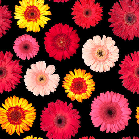 Seamless Pattern from Vibrant Gerbera Flowers, Wallpaper with black backdrop photo
