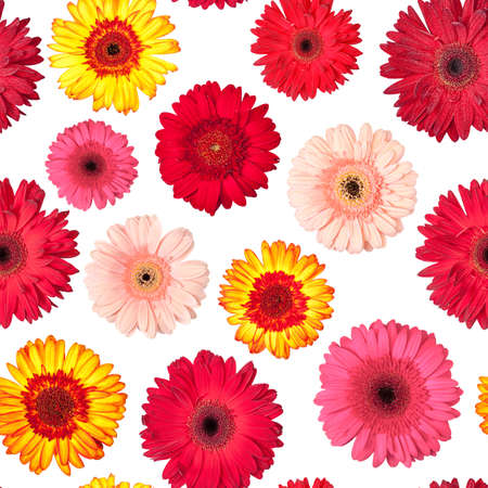 Seamless Pattern from Vibrant Gerbera Flowers, Wallpaper with white backdrop photo