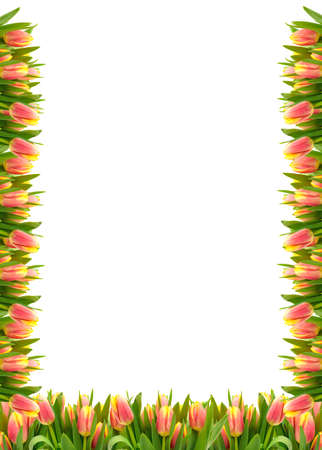 Frame of Tulip Flowers, over white background. photo